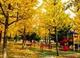 【徜徉方圆】满园秋色关不住